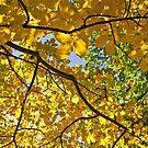 Cranberry Woods 2 by Paul Kavsak