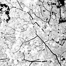 Cranberry Woods 3 by Paul Kavsak