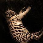 White Tiger by Anita Orheim