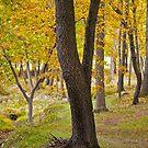 Cranberry Woods 7 by Paul Kavsak