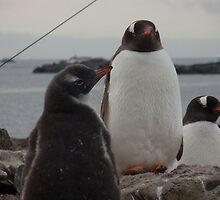 Proud Penguins by mischif