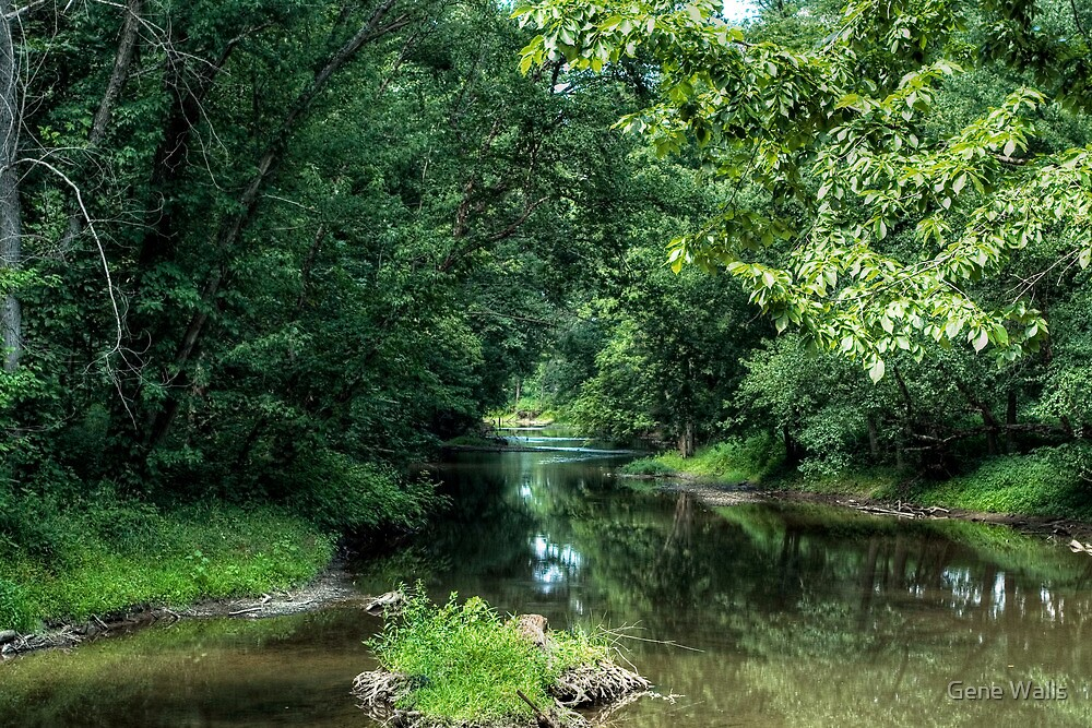 Chillisquaque Creek Running Through The Forests of Northumberland County by Gene Walls