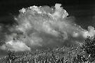Vermont Cloud #7 by Yuri Lev