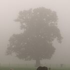 Horse in New Forest by Inspired-Images
