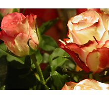 TO YOU MY FRIENDS WHO LOVE FLOWERS -- TO YOU MY FRIEND ROSES  FOR  CHRISTMAS DALL'ITALY !---VETRINA RB EXPLORE 13 NOVEMBRE 2012  !!!! 1800 VISUALIZZAZ MY FRIEND !        !!!! Photographic Print
