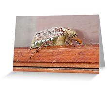 Cockchafer Dusted With Pine Pollen Greeting Card