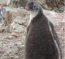 Penguin Baby by mischif