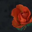 Red Rose  by Heather Friedman
