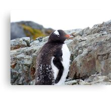 Penguin Chick Metal Print