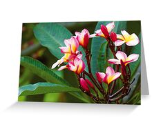 Red Frankomanii Flowers Greeting Card