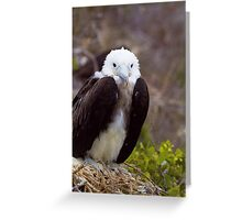 Frigatebird Greeting Card