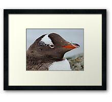 Penguin Detail Framed Print