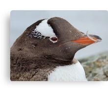 Penguin Detail Metal Print