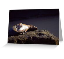 Seal on the rock Greeting Card