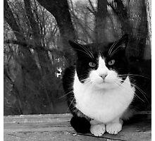 Licorice Cat Portrait | Gardner, CO USA Photographic Print