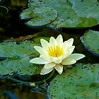 Waterlily | Giverny, France by rubbish-art