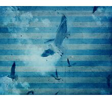 seagull in cyan 2 Photographic Print