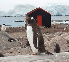 Penguin Post Office by mischif