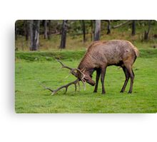 Musking Up  Canvas Print