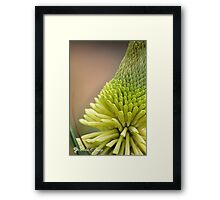 White Hot Poker Framed Print