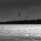 Geese at Oka by AndreCosto
