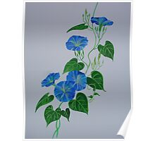 Blue Bindweed Poster