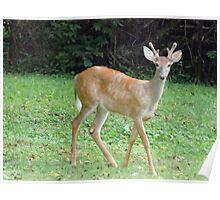 Back Yard Visitor Poster