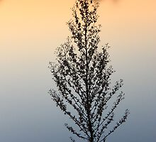 A Sunset Lake reflection Plant Silhuette,,,, by Adam Kuehl