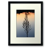 A Sunset Lake reflection Plant Silhuette,,,, Framed Print