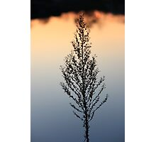 A Sunset Lake reflection Plant Silhuette,,,, Photographic Print