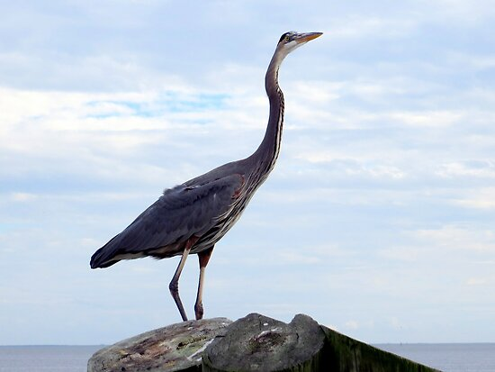 Great Blue Heron Against a Great Blue Sky by AuntDot