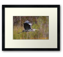 Great Blue Heron In Flight III Framed Print
