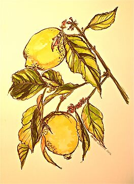 Lemons. Pen and wash 42x32cm by Elizabeth Moore Golding