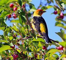 Tanager by Arla M. Ruggles