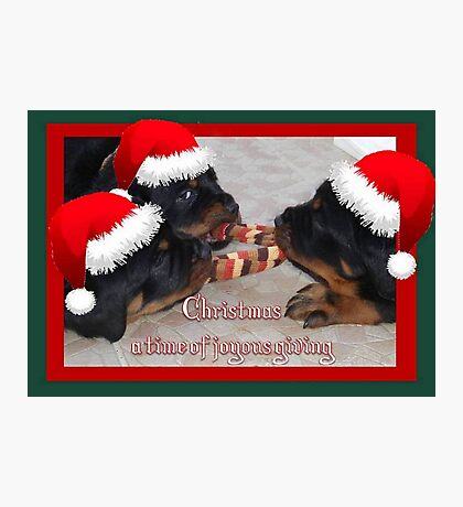 Christmas Rottweilers: A Time Of Joyous Giving  Photographic Print