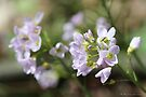 Pretty flowers - what are they called by Photos - Pauline Wherrell