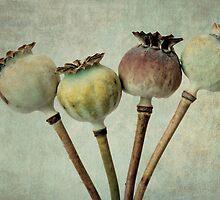 Poppy pods by Anne Staub