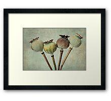 Poppy pods Framed Print