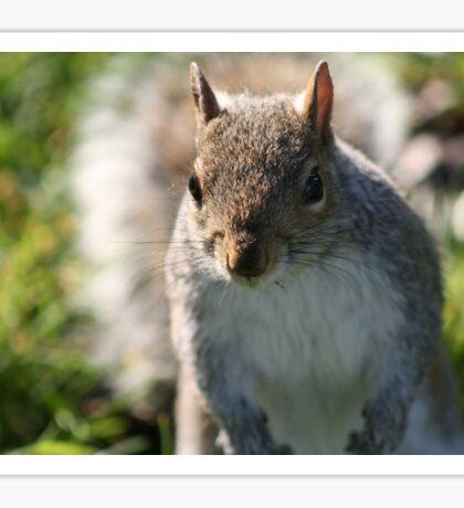 Squirrel in Regents Park Sticker