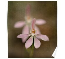 Australian Native Orchids Poster