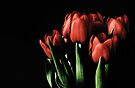 Red tulips by Anne Staub