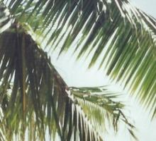 Palm Tree Vintage Sticker
