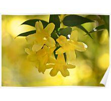 Sunshine Vine Poster