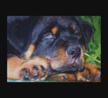 Photographic Portrait Of A Young Male Rottweiler One Piece - Short Sleeve