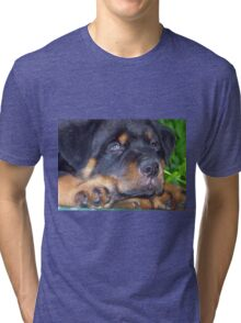 Photographic Portrait Of A Young Male Rottweiler Tri-blend T-Shirt