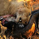 Lion Kill 2 by PBreedveld