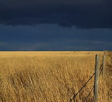 Prairie Storm by Alyce Taylor