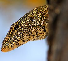Water Monitor Lizzard 2 by PBreedveld