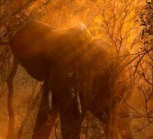 Elephant at sunset by PBreedveld