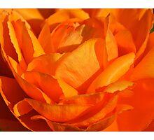 Orange Petals Photographic Print